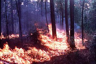 28.08.1992r. Wysoki stopień palności spowodował wprowadzenienajwyższego stopnia gotowości operacyjnej. Dwa zastępy JRG Węgrów zostały zadysponowanena teren województwa katowickiego do gaszenia, jak się okazało największego pożaru w Europie, pożaru  w Kuźni Raciborskiej. Spłonęło wówczas ponad 9,5 tys. ha lasów.